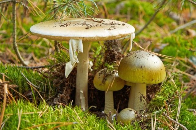 photo of mushrooms
