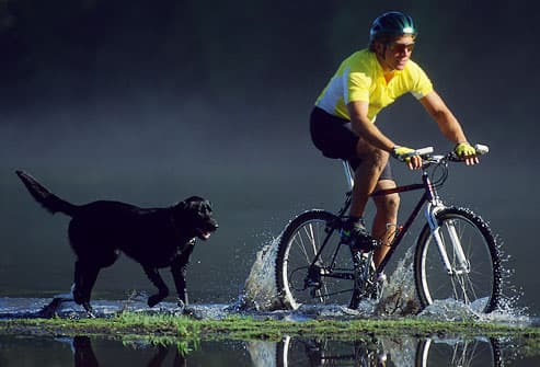 Man riding bicycle through water with dog