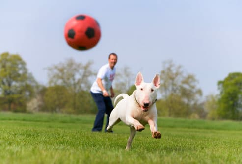Image result for dog playing ball