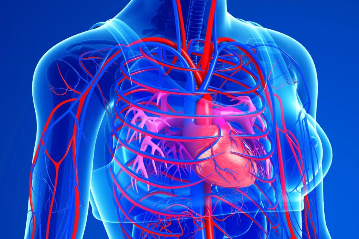 photo of heart health
