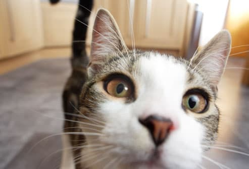 Cat Health Center | Cat Care and Information from WebMD