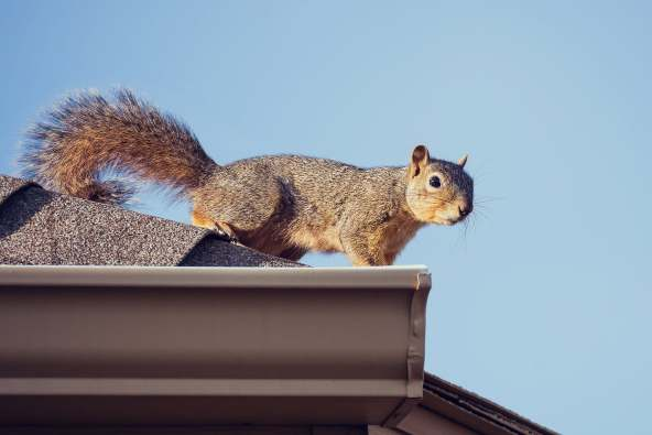 photo of squirrel on roof
