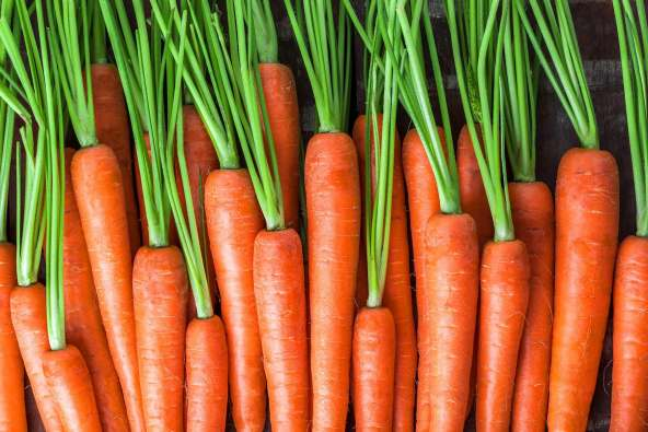 photo of raw carrots