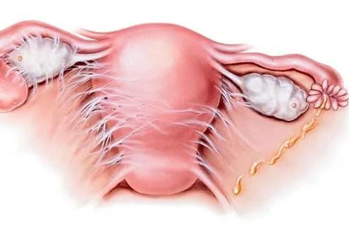 Herpes Symptoms Include Anal Bleeding, Blood In Urine & Abdominal Pain? 1
