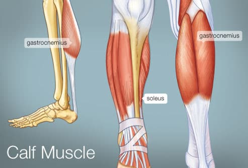 The Calf Muscle (Human Anatomy): Diagram, Function, Location