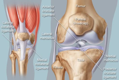 Anatomical illustration of knee