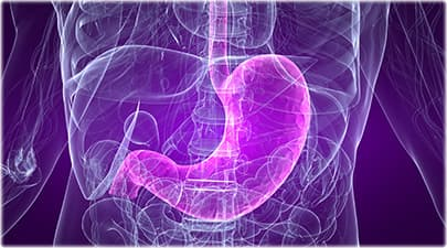 Stomach Quiz: Surprising Facts