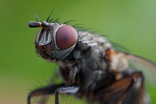 Mucha Zwierzę Mocy w magii