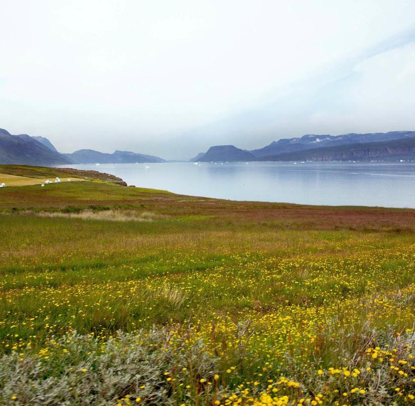 In summer Greenland shines in lush green