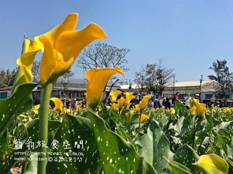 2017年桃園彩色海芋季;芋見你,真好!活動只到4月21號喔!//美麗鮮花只為你綻放//桃園