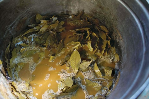 Psychedelic tea being made in Ceu do Mapia, Brazil.