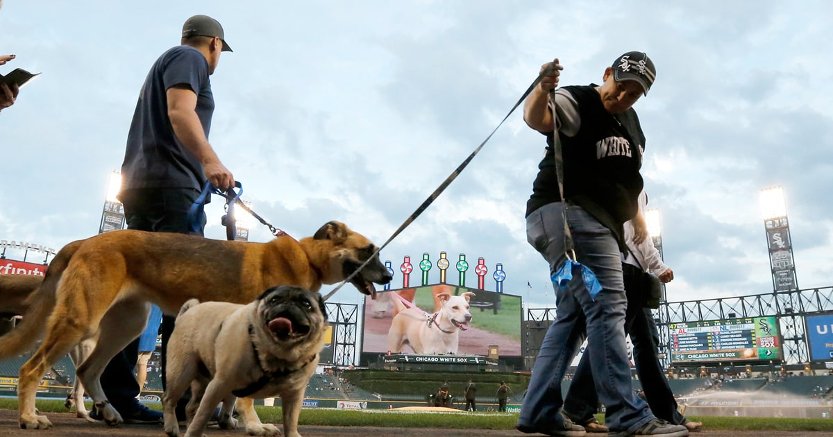 Chicago White Sox Break Most Dogs In Attendance World