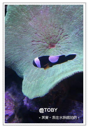 澳洲打工。天殺的!就差那一跳~大堡礁Great Barrier Reef