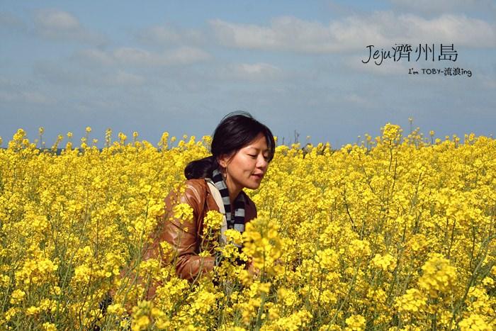 濟州島JeJu。美麗到眼睛都花花花的油菜花季