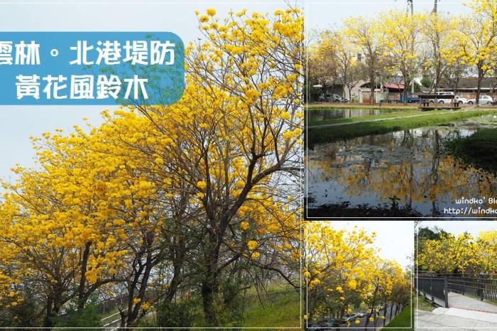 雲林遊記∥ 北港堤防、水道頭文化園區黃花風鈴木_2021年