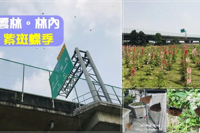 國道讓蝶道∥ 2021年雲林縣林內鄉紫斑蝶季活動,三月底~四月限定的紫蝶飛越國道3號防護網