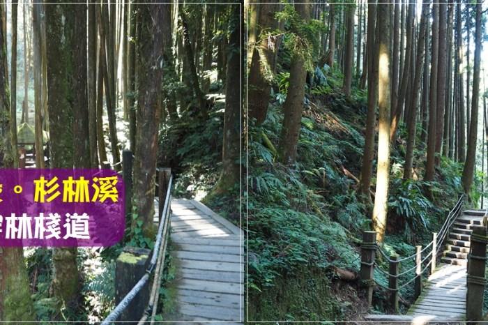 南投景點∥ 杉林溪 森呼吸 – 穿林棧道,柳杉環繞的舒服踏青步道