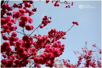 [5Y7M+2Y5M] 2013蛇年.11天春節連假全紀錄