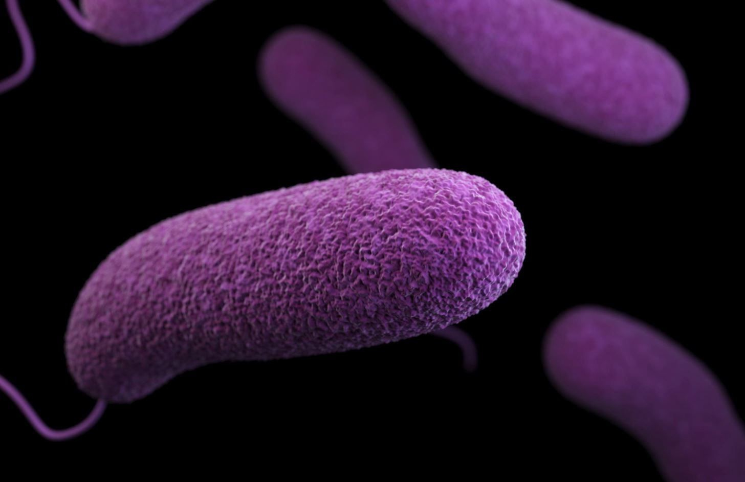 List Of Synonyms And Antonyms Of The Word Microbes Fungi
