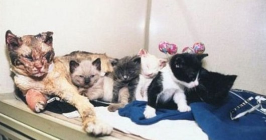 Resultado de imagem para cat walks through fire to save kittens
