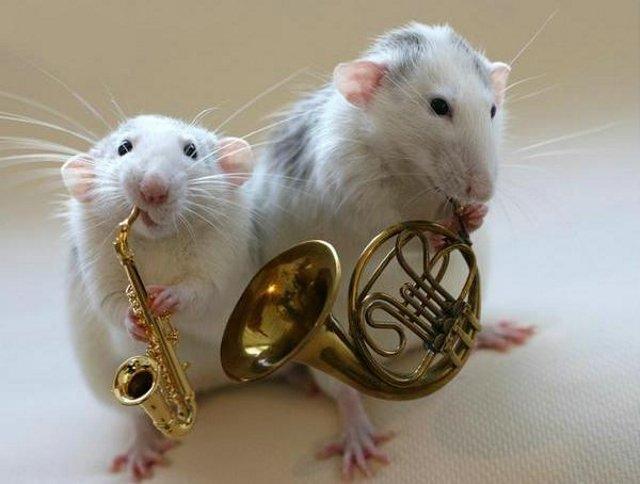 Cute Rat Musician