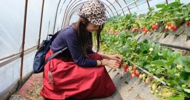 靜岡景點︳靜岡採草莓(章姬草莓/紅顏草莓),30分鐘日本草莓吃到飽(久能屋草莓園)