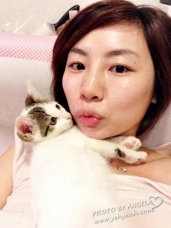 [寵物] 我們家的貓咪新成員-點點