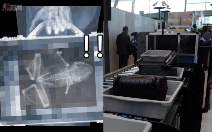 【膠民』她被美國海關攔下來問「行李箱裡怎麼有青蛙」抖著打開行李箱卻笑歪:這後勁太強了!1123 - Yespick ...