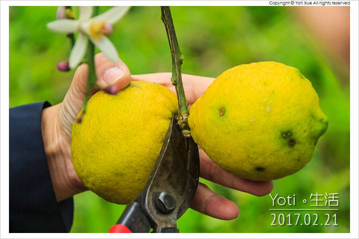 [花蓮瑞穗] 法采有機生態農莊   登上舞鶴台地採收有機檸檬, 每顆都跟拳頭一樣大!〈體驗邀約〉