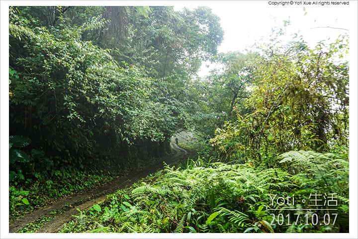 [花蓮太魯閣] 砂卡礑林道   往返大禮部落與大同部落的林蔭路徑