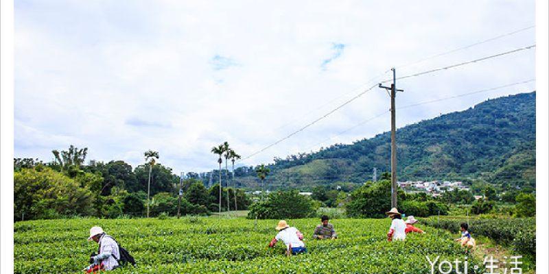 [台東鹿野] 採茶體驗與洛神花果醬 DIY, 感受鹿野不一樣的農事體驗