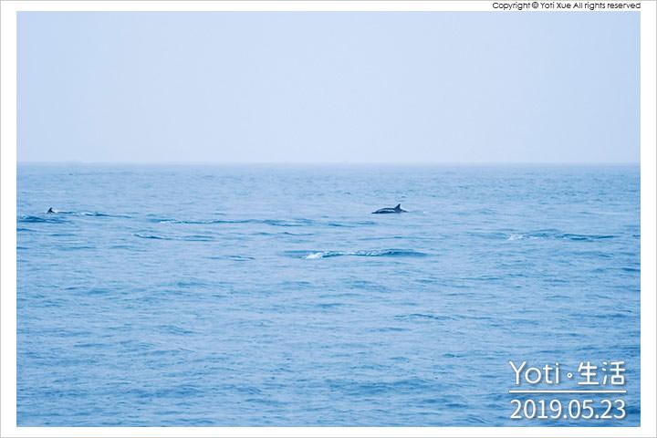 [花蓮漁港] 花蓮港休閒碼頭 | 一年四季都適合, 賞鯨魚海豚的起點登船處