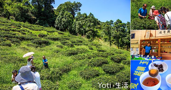 [花蓮玉里赤科山] 吟軒茶坊   品茗之餘, 不妨來趟山上農場的茶園導覽體驗吧!