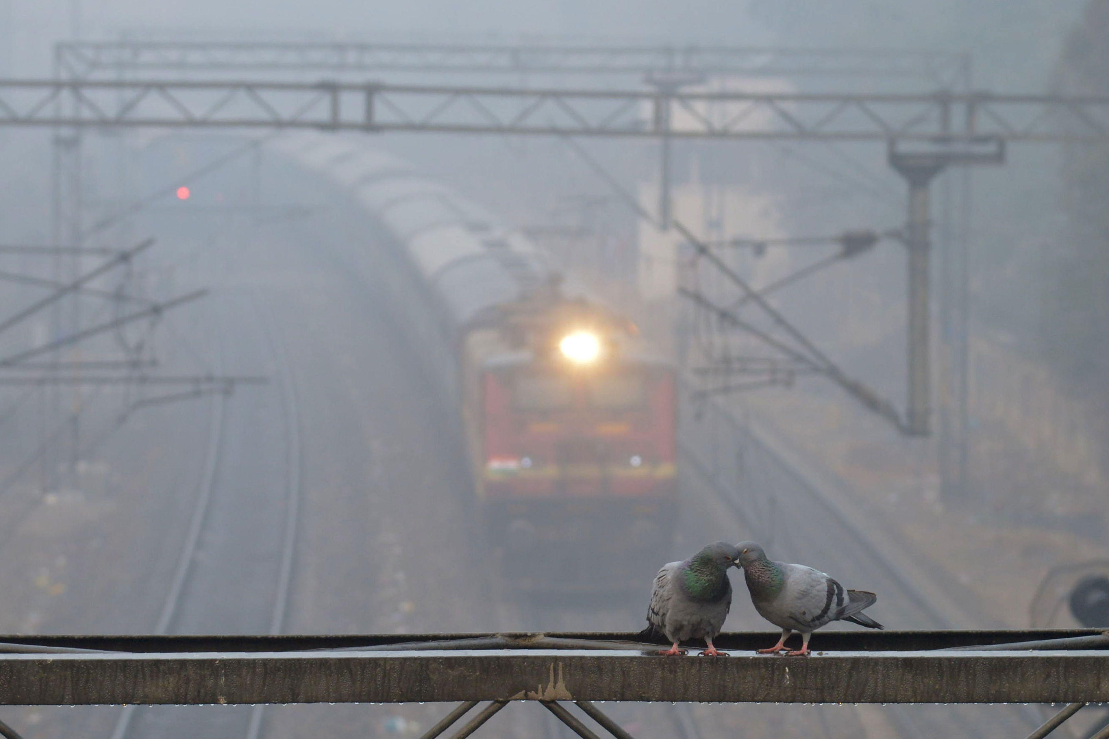 الضباب يجتاح مدن الهند