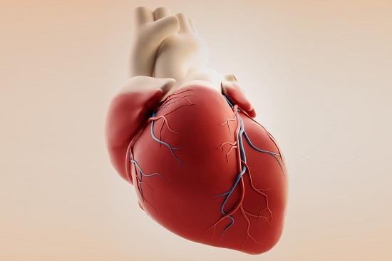 قلب-الانسان