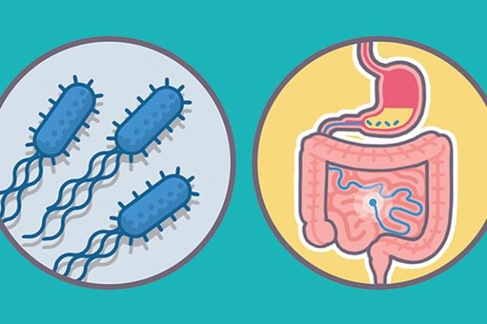 Bacteria enter the body