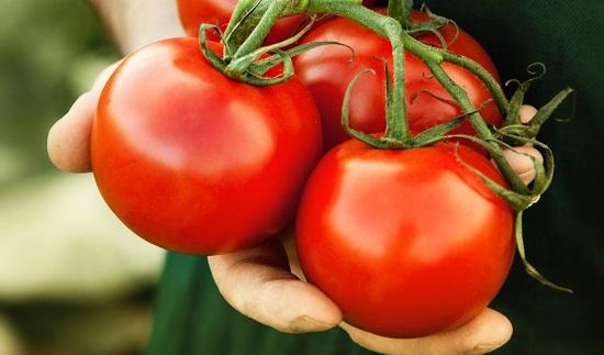 hero_tomatoes_held
