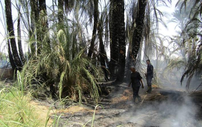 السيطرة علي حريق إلتهم عدد من أشجار النخيل بقرية السريب بإسنا (1)