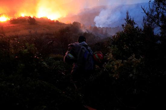 النيران تلتهم الأشجار والنباتات