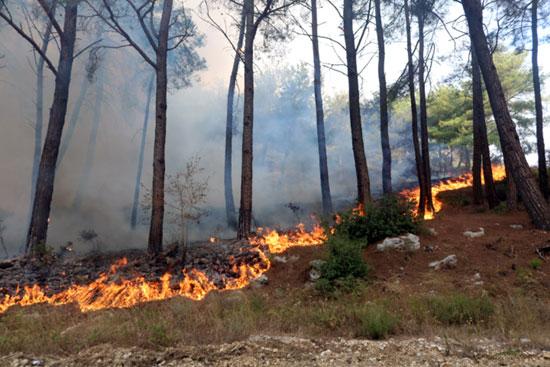 حرائق الغابات فى سوريا