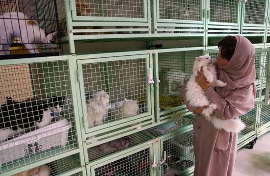 البلوشي حولت بيتها للحيوانات المشردة