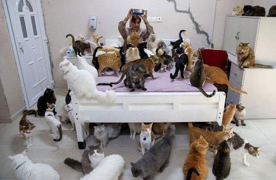 منزل البلوشي صار مأوى لكلاب وقطط كثيرة