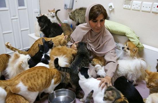 قطط مريم البلوشي