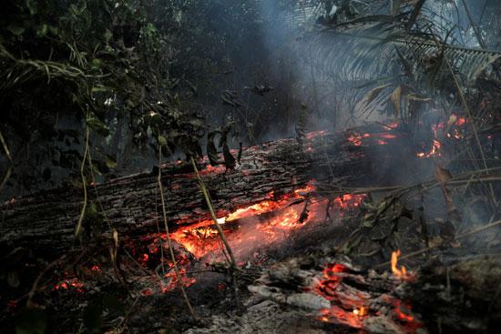 النيران تلتهم الأخضر واليابس فى غابات الامازون