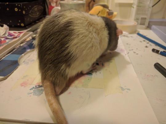 فئران ترسم لوحات فنية (1)