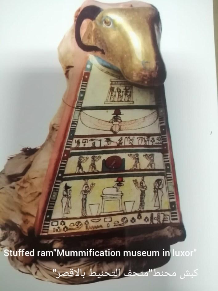 كبش محنط متحف الاقصر