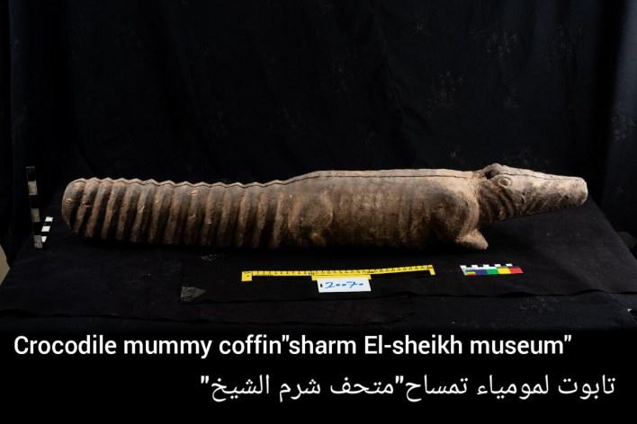 تابوت لمومياء تمساح متحف شرم الشيخ
