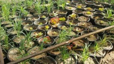باحثون بريطانيون يطورون تقنية لتحسين نمو النبات بأقل كمية من المياه