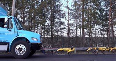 صور .. 10 روبوتات على شكل كلاب تعمل معًا لسحب شاحنة نقل كبيرة