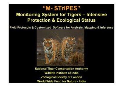 Image result for M-STRIPES NTCA